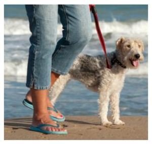 Walking your dog on the beach