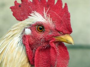 Avian flu guidance changes