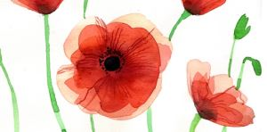 The poppy;  symbol of Remembrance Day and Sunday