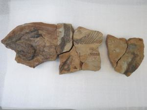 The shark fossil is one of the most complete to have been found in England.